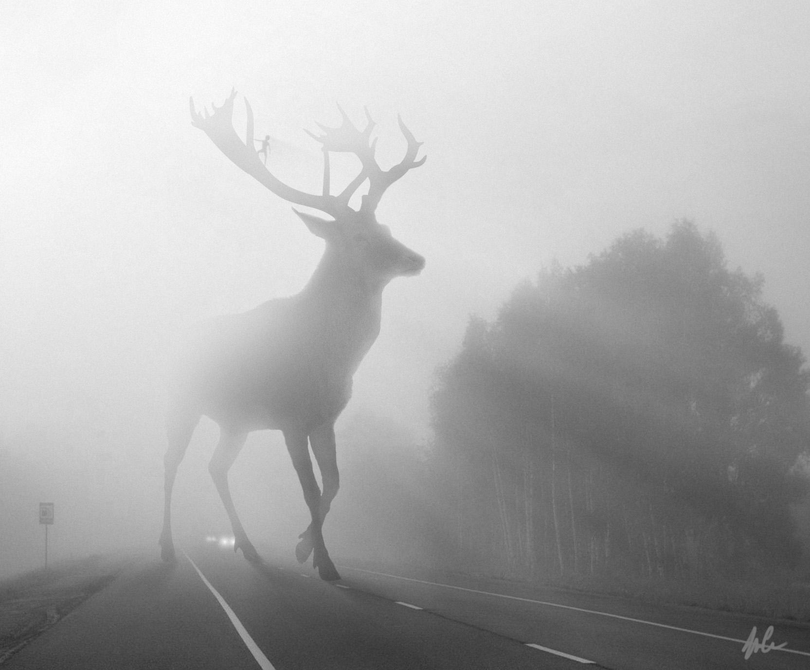 DeerRoad_hires.jpg