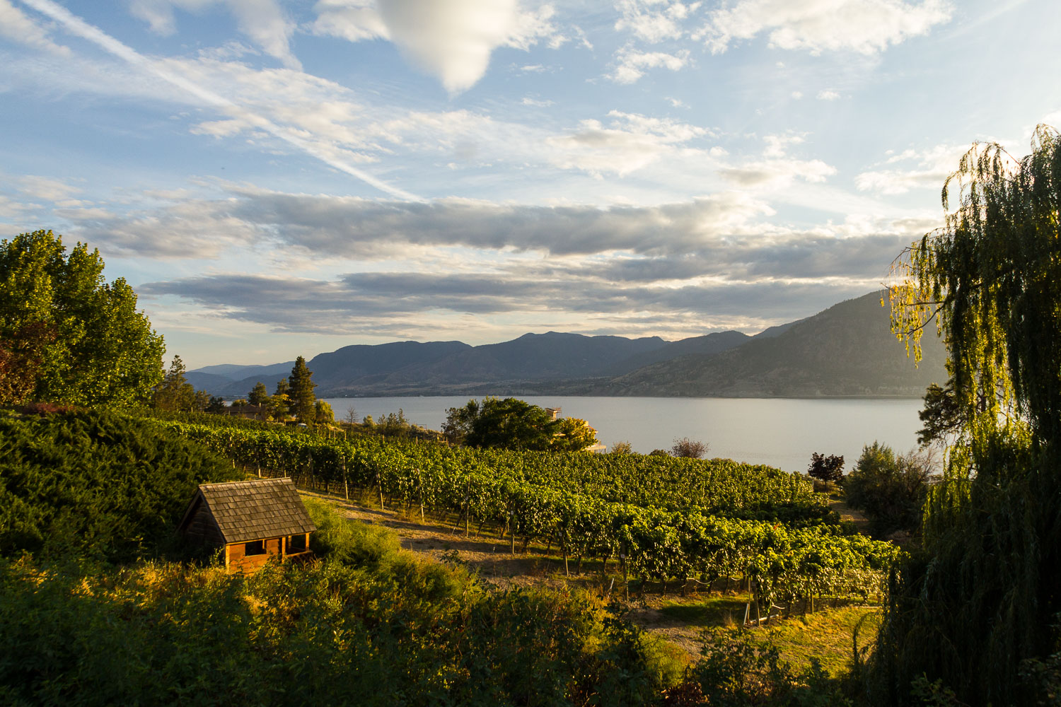 View with Vines over Lake Okanagan, Naramata, BC. Photo by Helena McMurdo/Endless Picnic