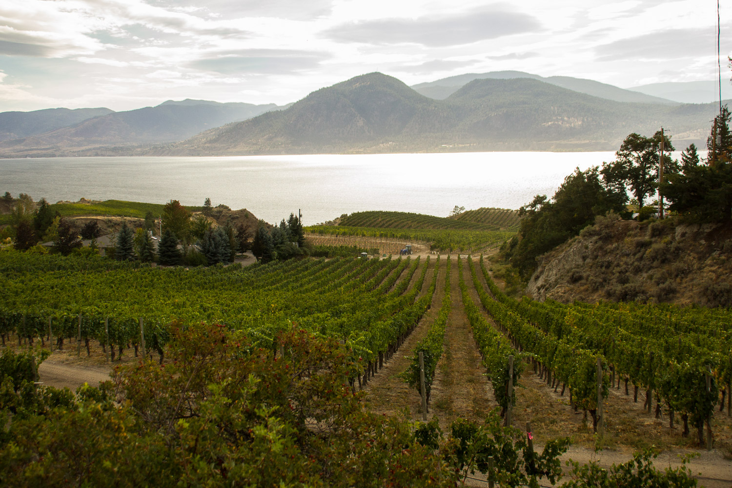 Lake Breeze Winery, Naramata, BC. Photo by Helena McMurdo/Endless Picnic