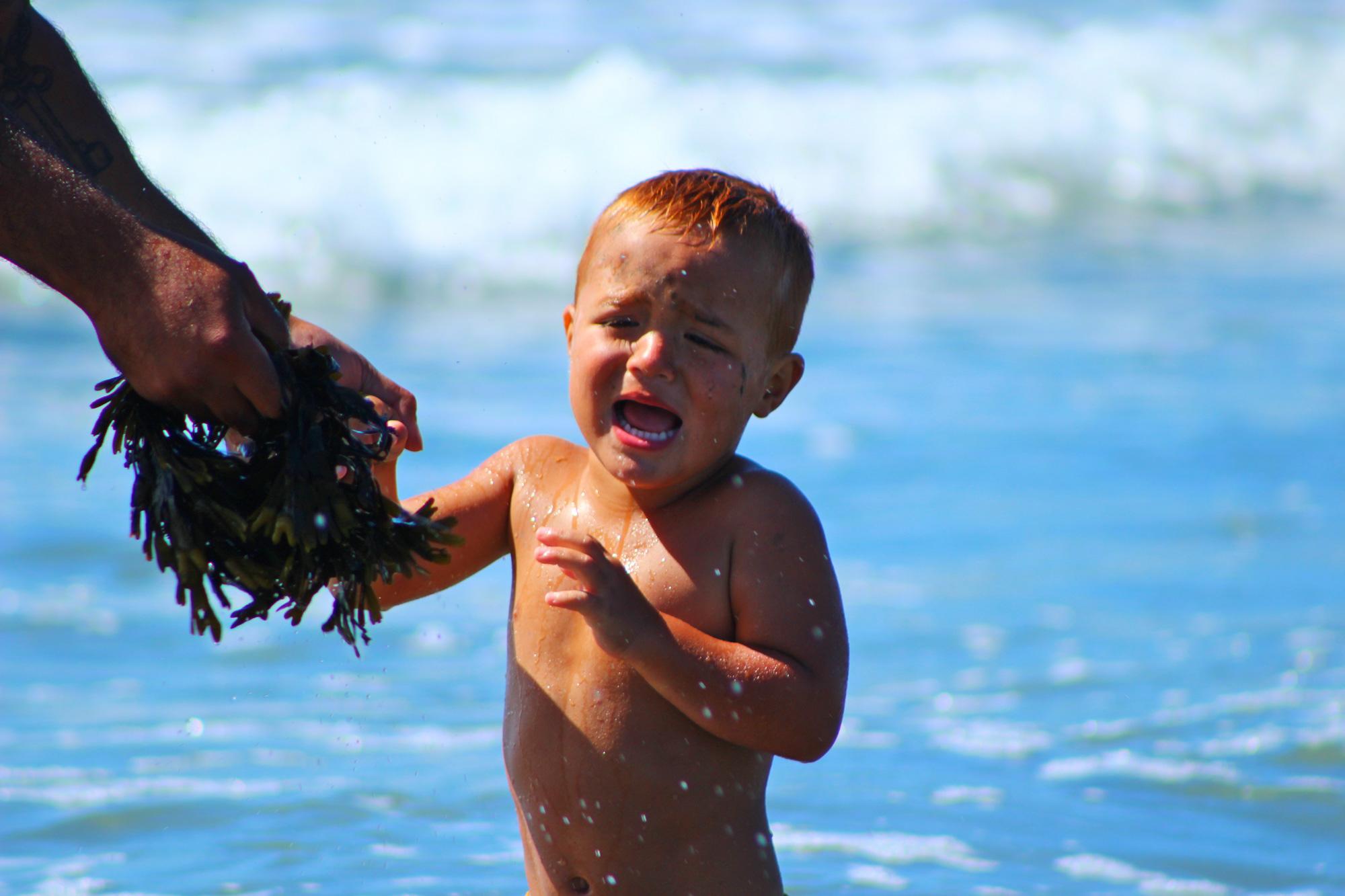 seaweedterrifying.jpg