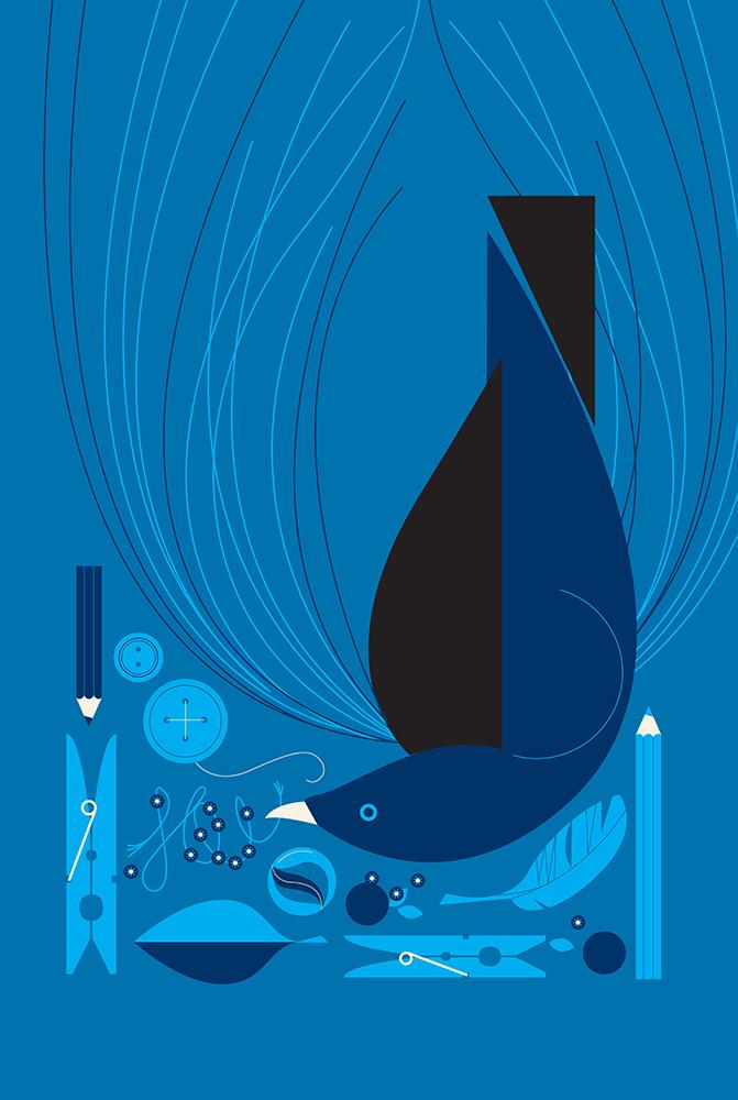 bowerbird-blue.jpg