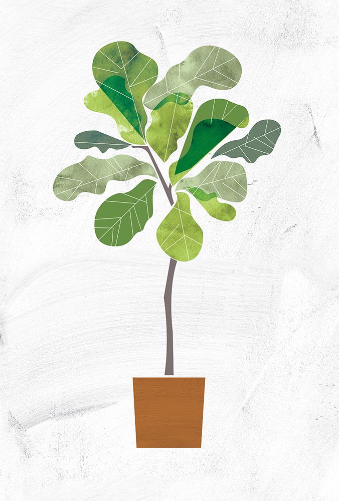 fig-tree.jpg