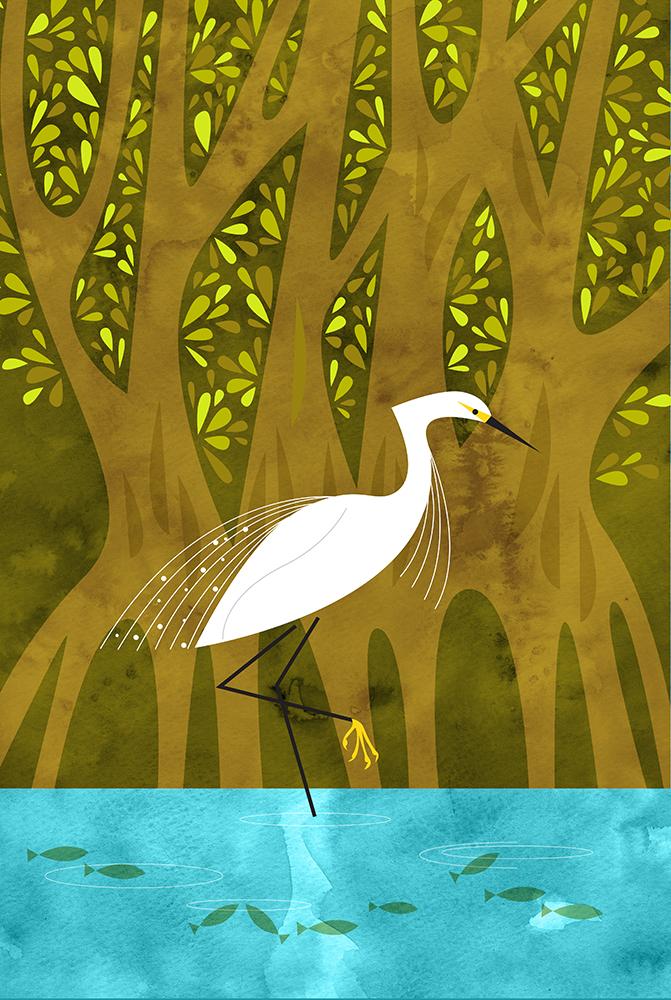 florida-mangrove.jpg