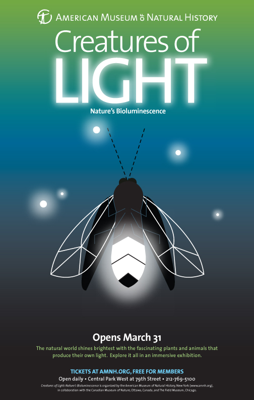 creaturesoflight-firefly.jpg