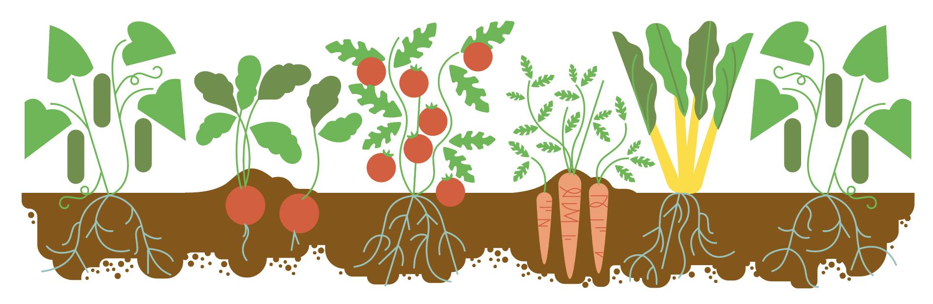 garden-vegetables.jpg