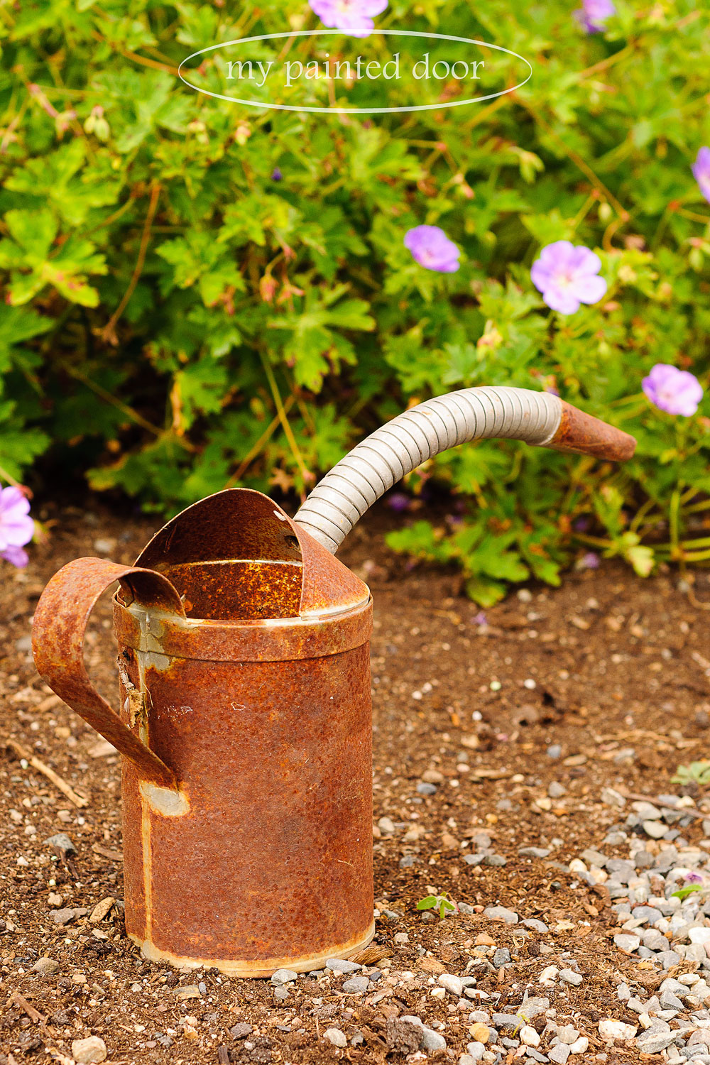 rusty can for my garden