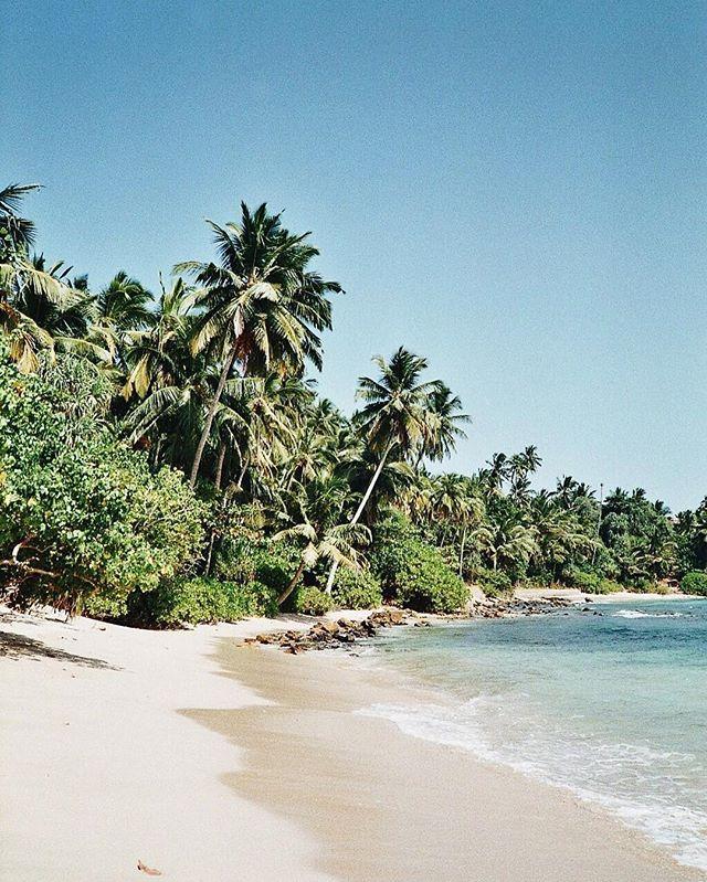 Take us back home.  #mood #silentmind #kinsfolk #srilanka #beach #palmtrees #inspiration #nature