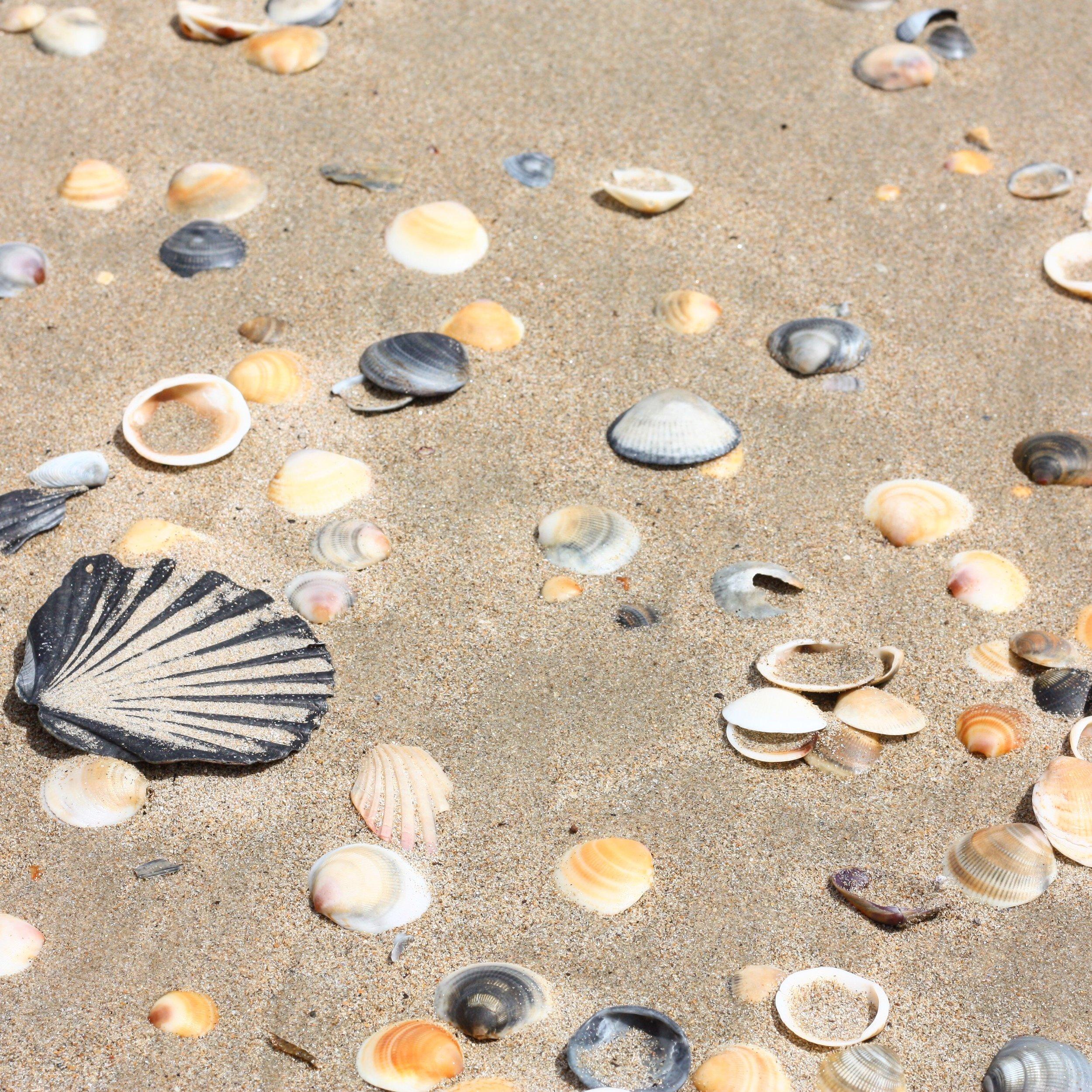 kelvedon-seashells