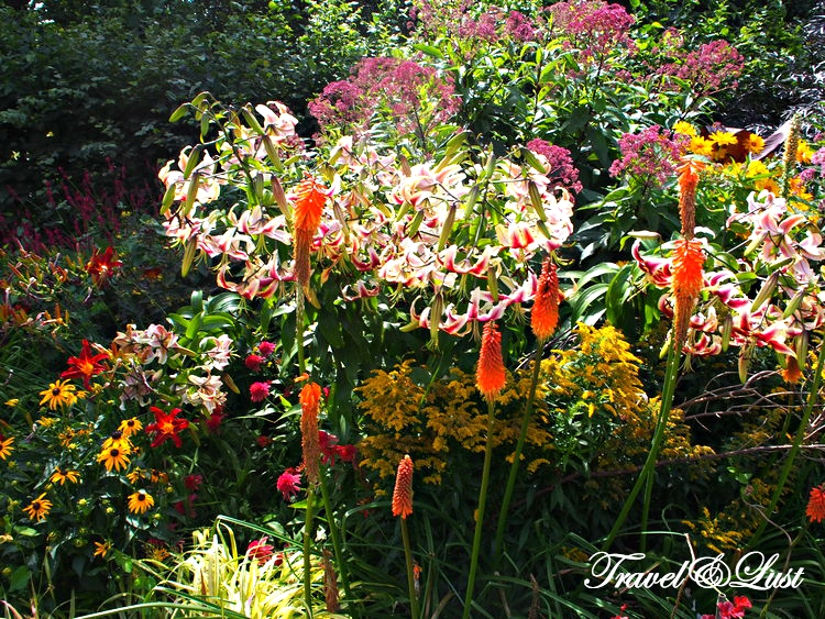 Beautiful flowers and plants around Regent's Park.