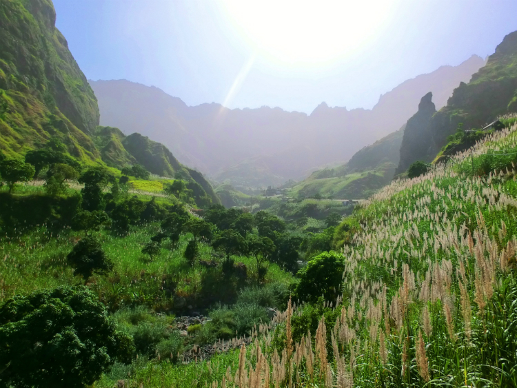 Santo Antao Paul Valley Sugarcane.jpg