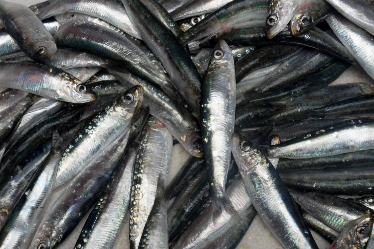 Freshly caught fish at the Bolhão Market in Porto, Portugal.