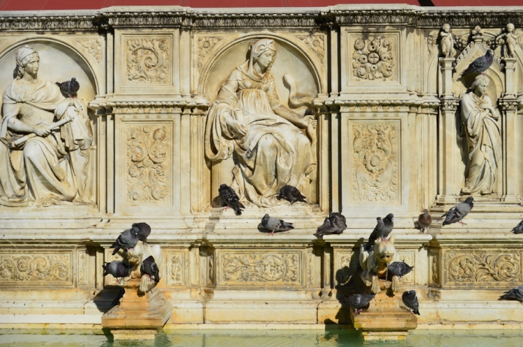 Pigeons lined along a fountain in Siena.