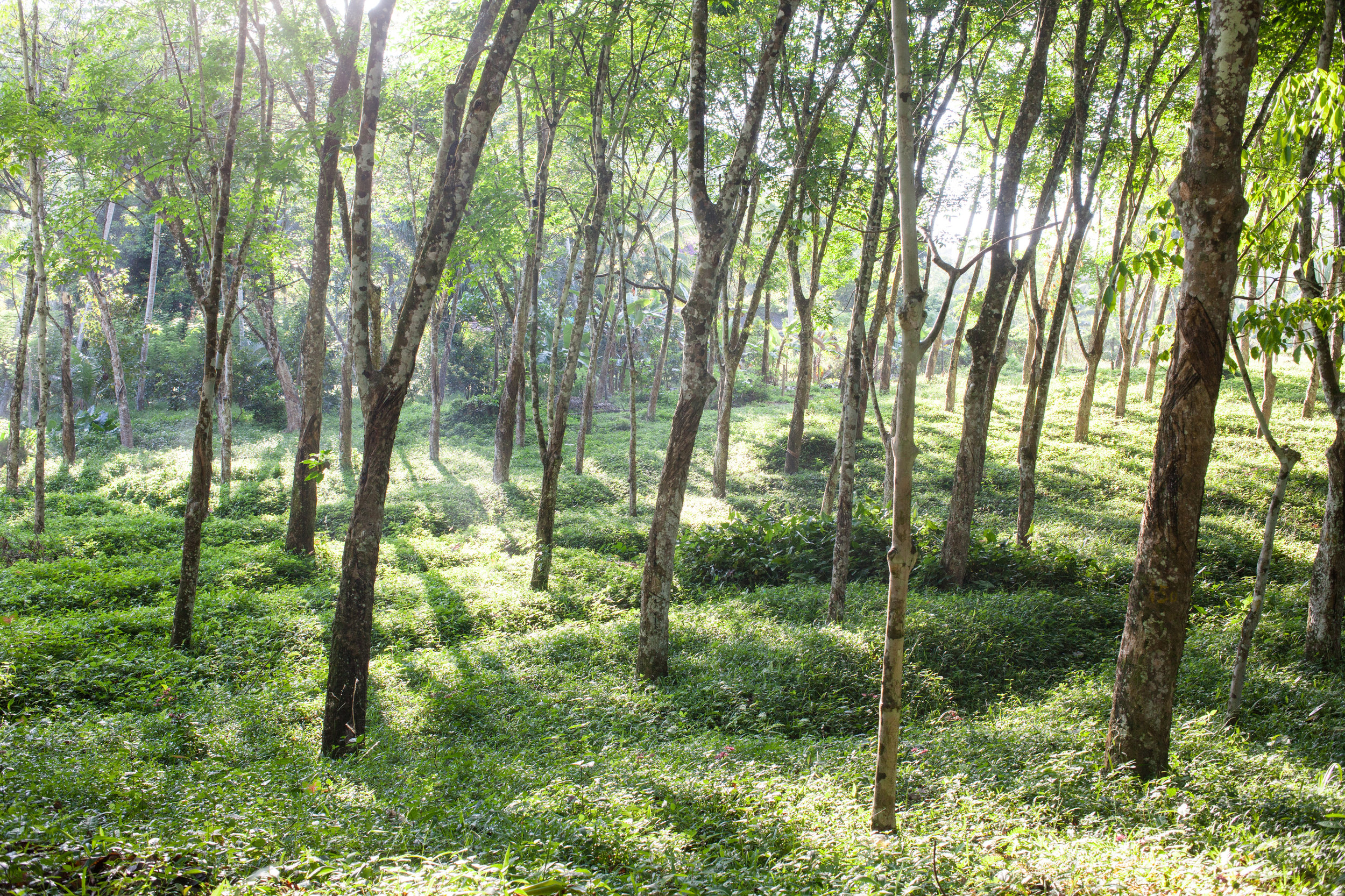 150330_Srimal_Hotels_PlantationVilla_176.jpg
