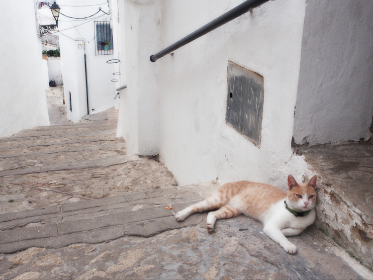Friendly cat in the old town.