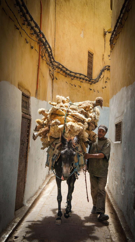 Mule transportation in the Medina.