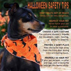 Halloween-Safety-Tips 300x300.jpg