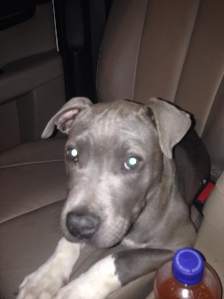 3 mo old blue pup.jpg