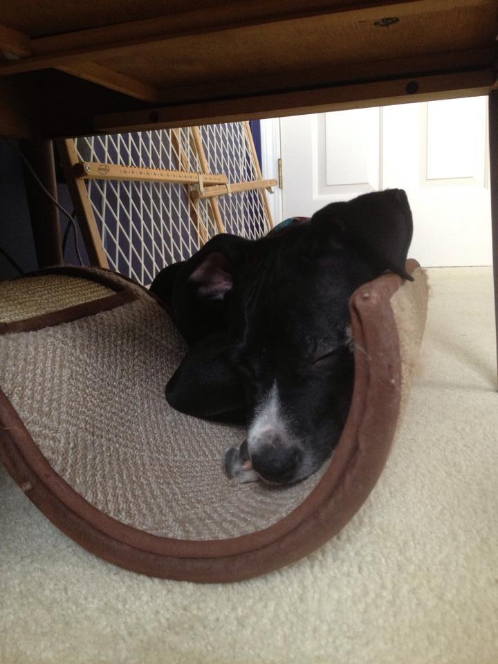Who me?  I got sleepy.