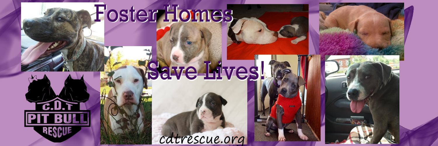 Foster Homes Save lives 4.jpg
