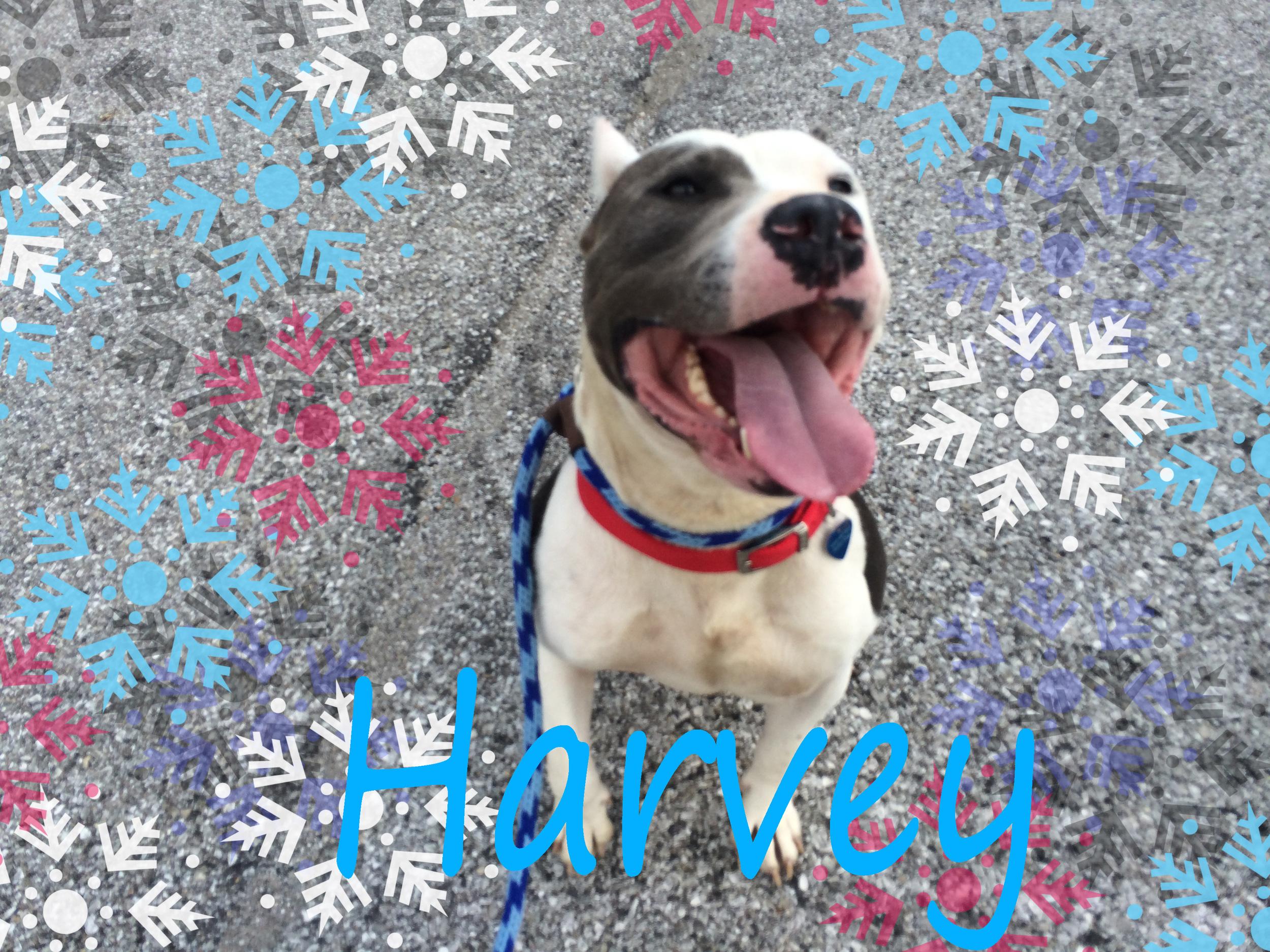 Harvey snowflake.jpg