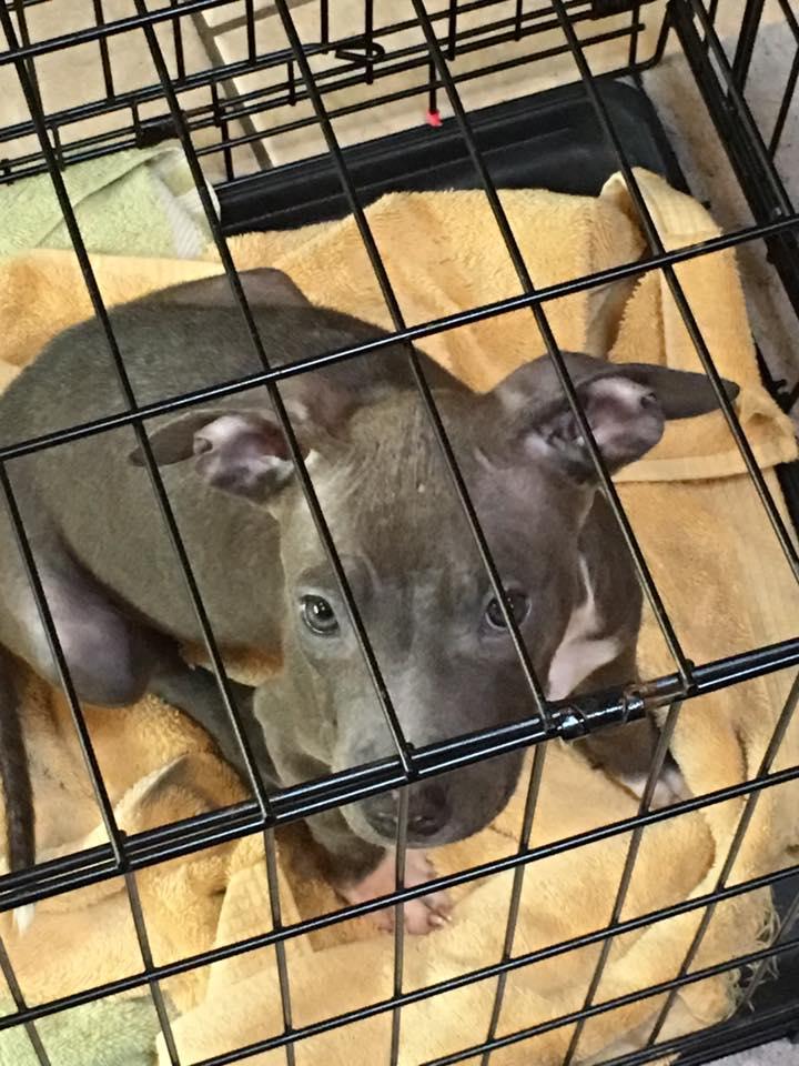 Bonnie after first bath.jpg