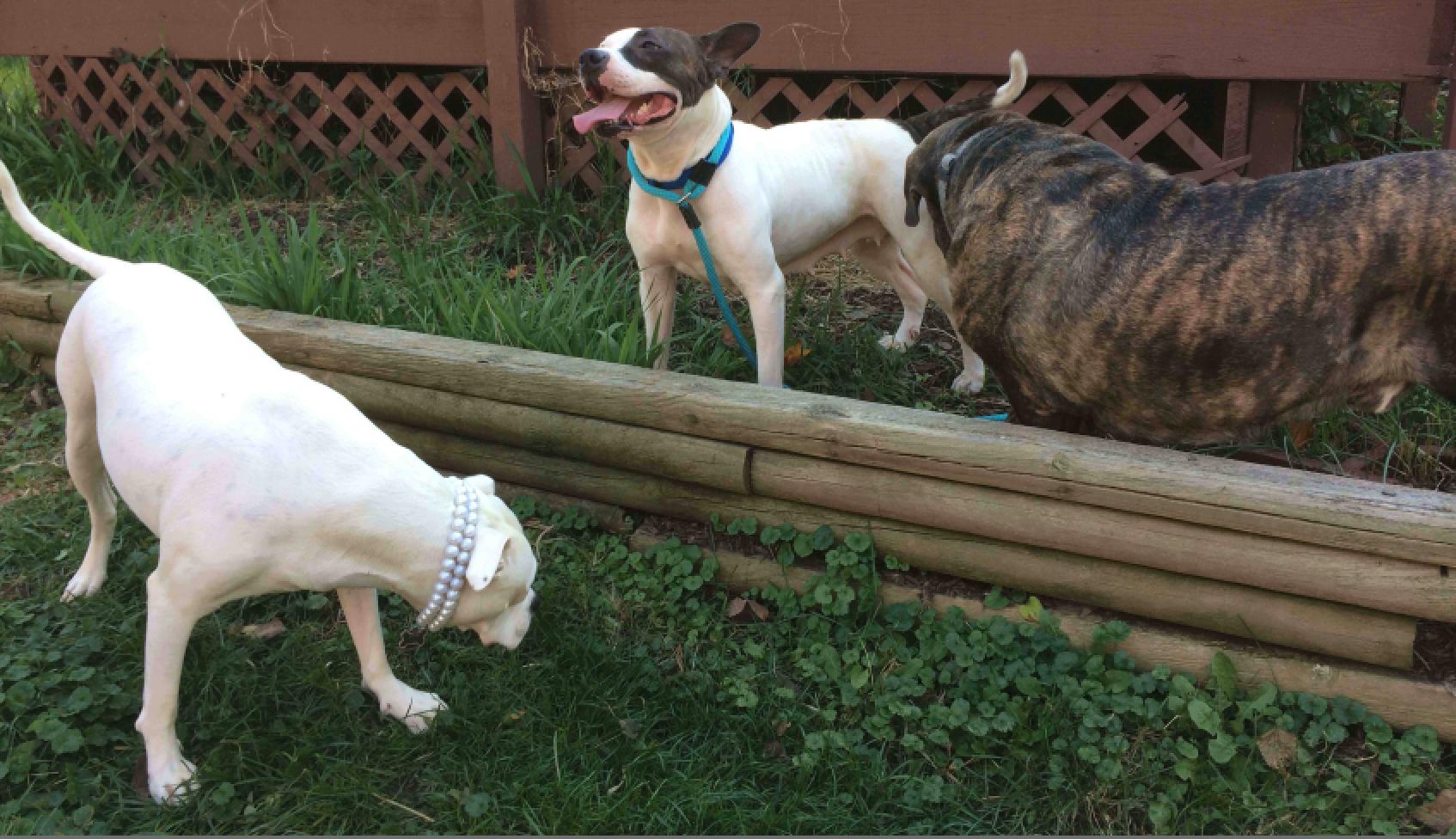 Ruby & her foster siblings