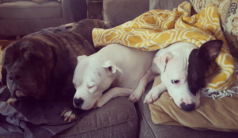Ruby and foster siblings sleeping.jpg