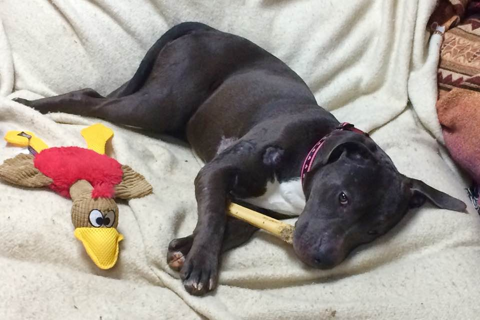 011617 Jackie and her duck and a nylabone too.jpg