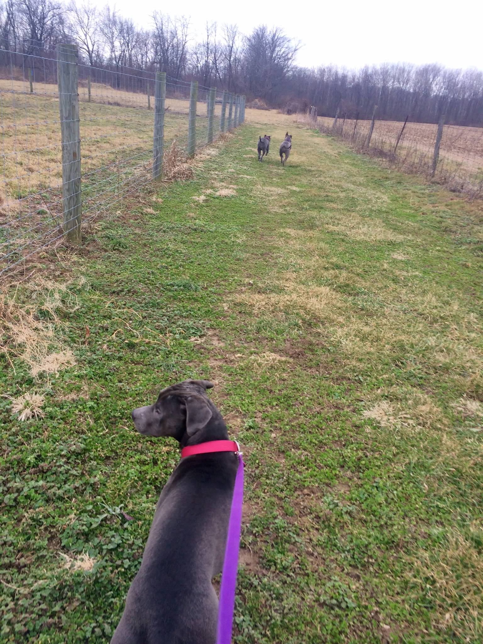 020117 Jackie and Lucy and Bella in the distance.jpg