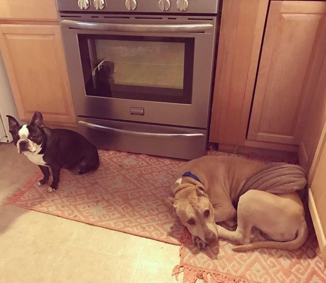 Otis and Peanut