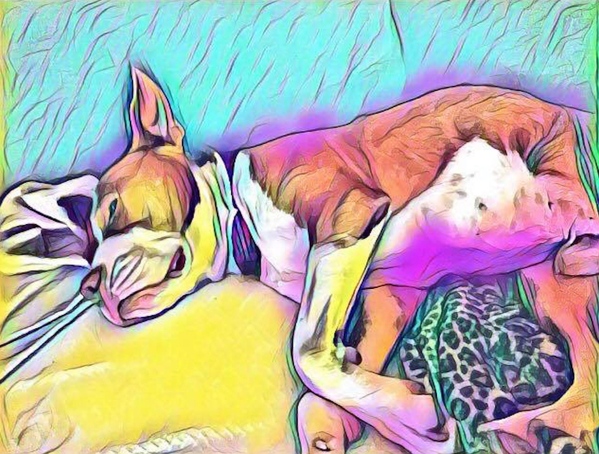 Piccasso nap