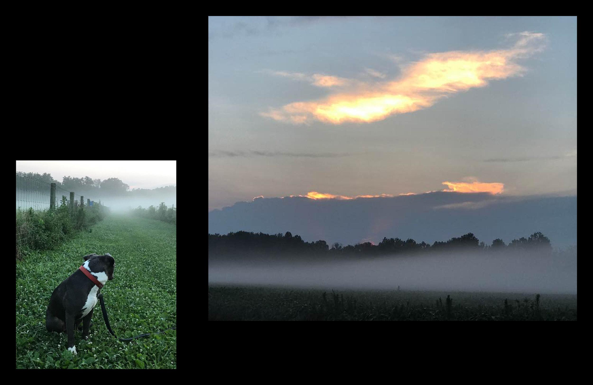 Foggy sunset on the farm