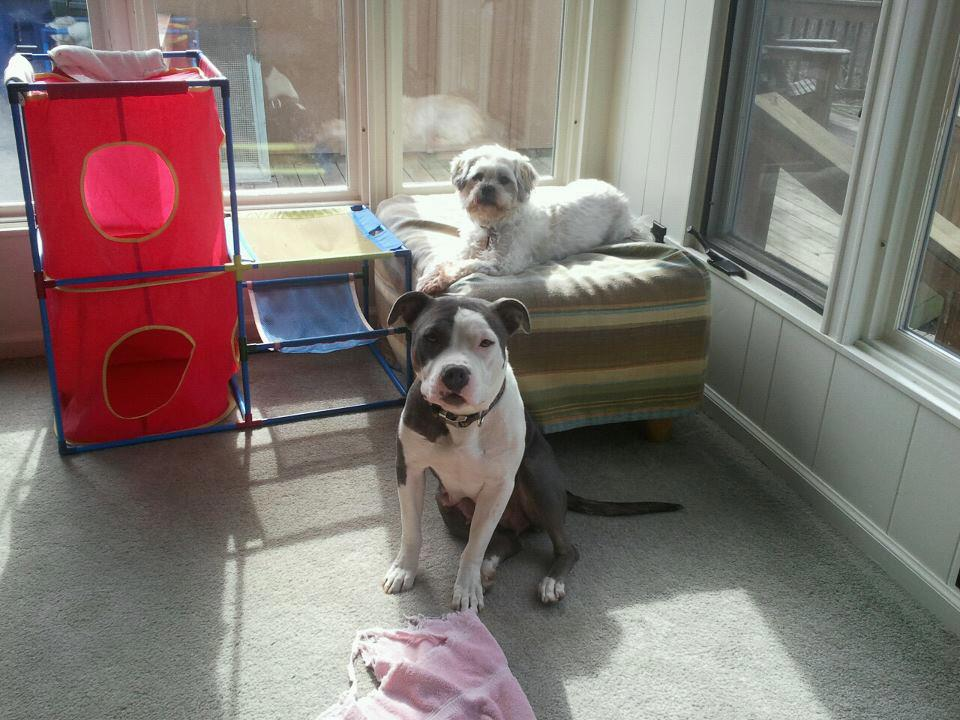 Sun bathing with Wilson