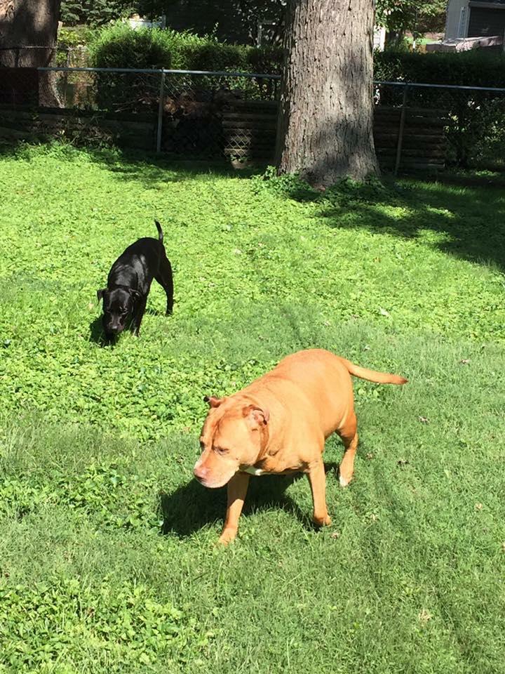 Luna & Red Dog