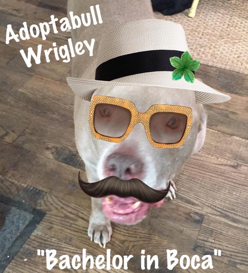 Wrigley Halloween costume