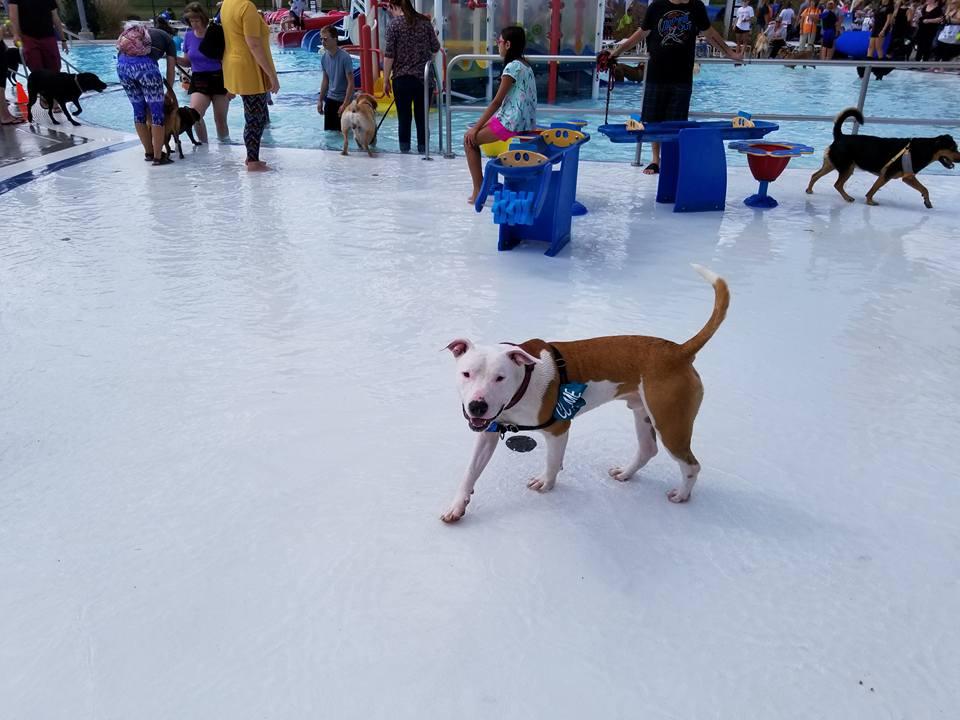 Ace enjoying the pool.