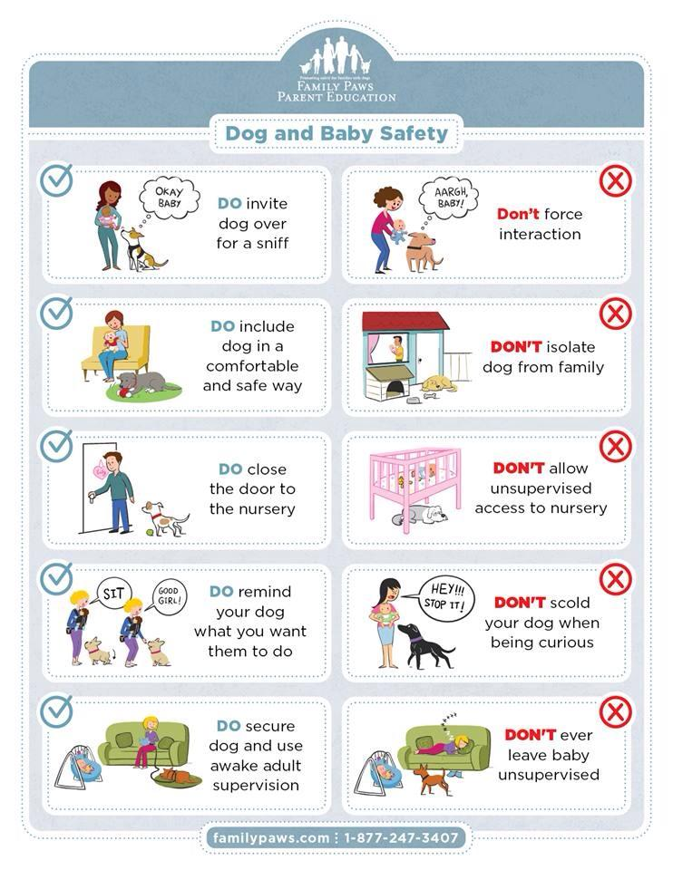Do and Dont dogs and babies.jpg