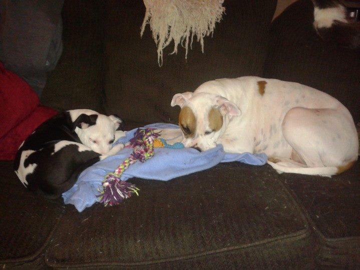 Angus and foster mom Daisy Mae.jpg