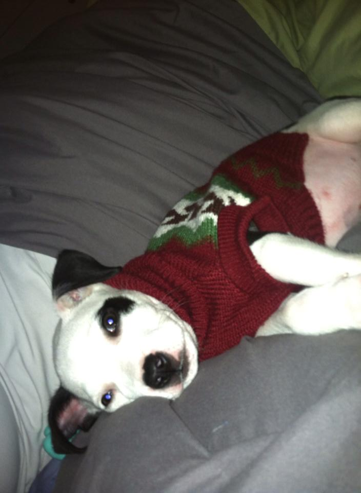 Angus puppy nov13.jpg
