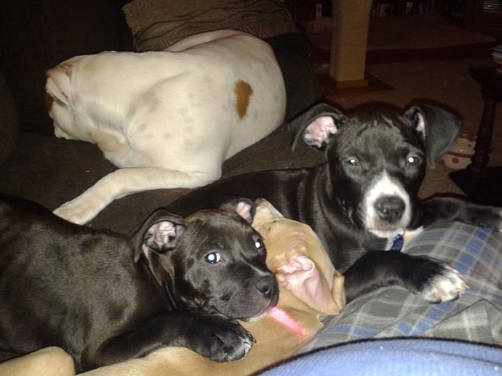 Elsie et al Puppy pile 208.jpg