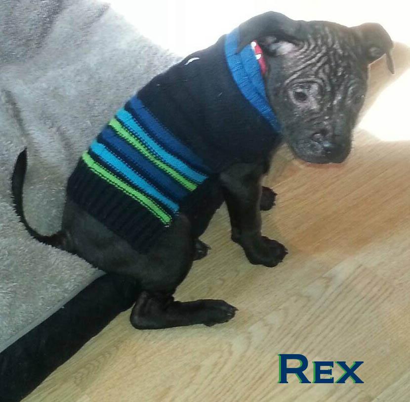 Rex_sm.jpg