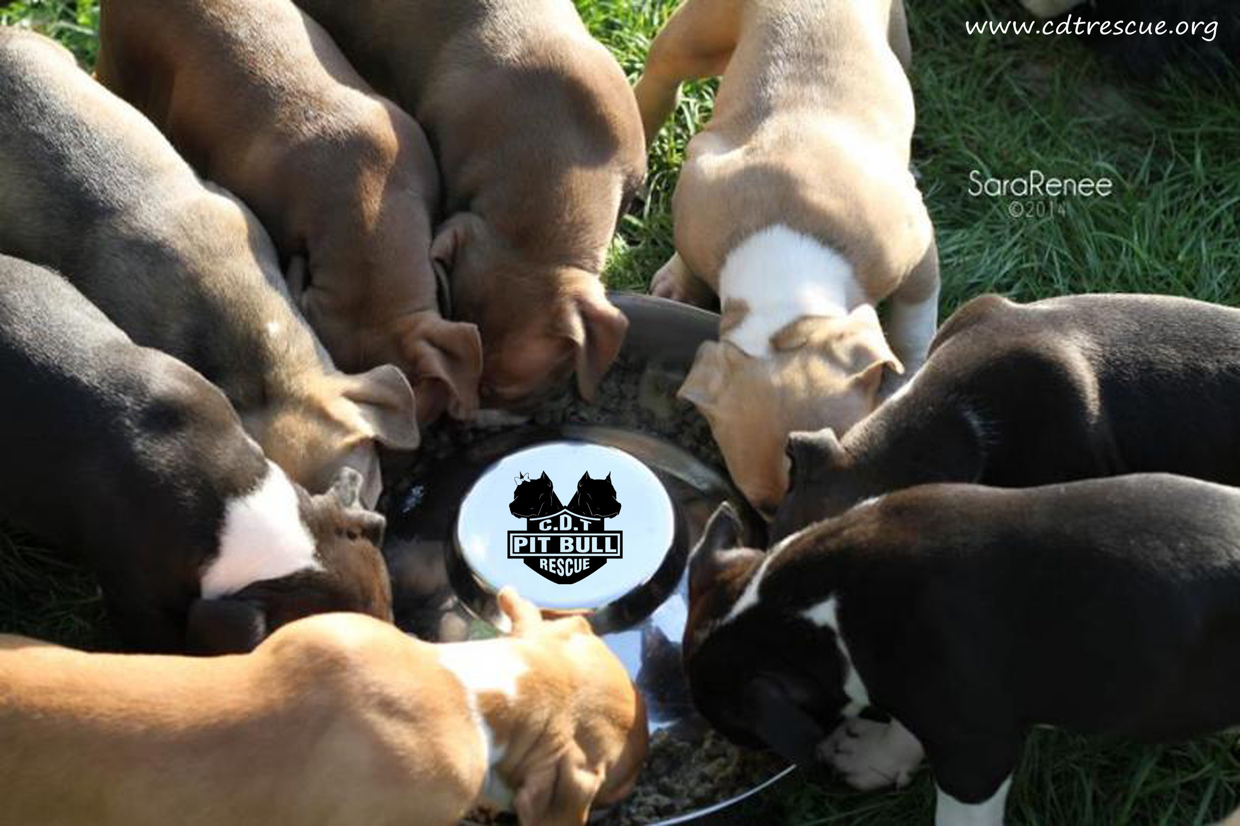 A 05 Puppies eating at big bowl.jpg