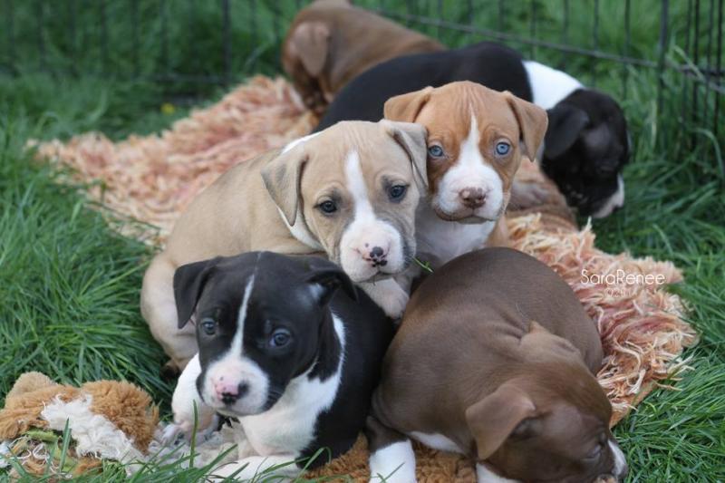 puppy pile of beans.jpg
