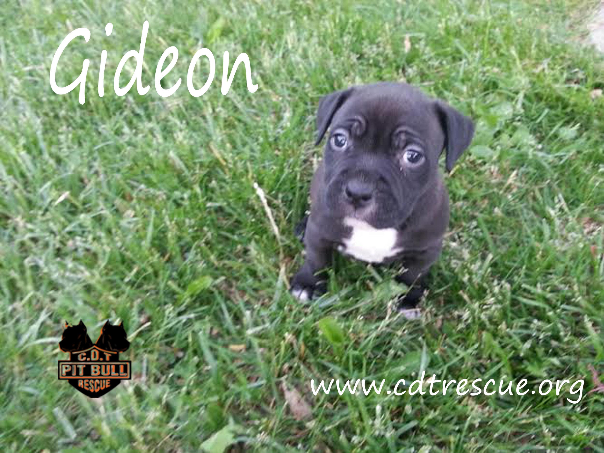Gideon_B.jpg