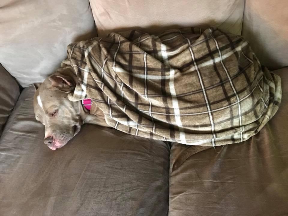 Seva snuggles.png