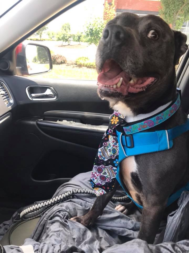 riding to forever home