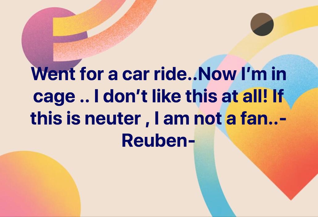 reuben neuter2.png