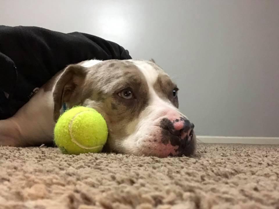 I love ball!
