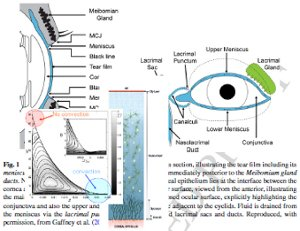 Mathematical modelling of the human tear film.