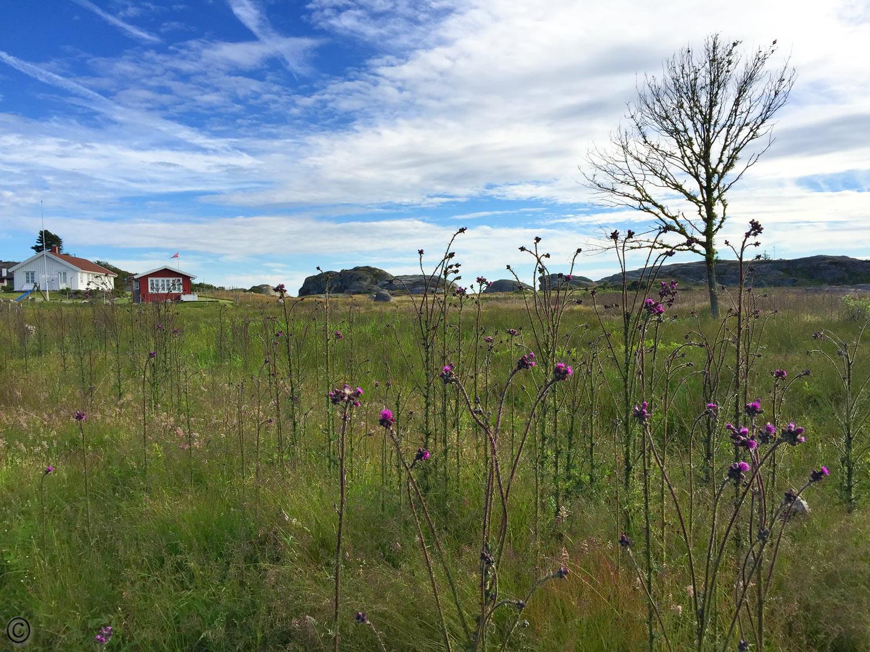 Området mellom Mostranda og Moutmarka byr på en usedvanlig vakker natur med sjeldne planter og vegetasjon.